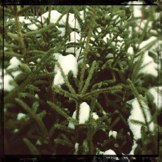Weekly Photo Contest: Let it snow!-imageuploadedbytapatalk1387294343.550854.jpg