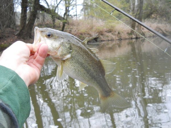 The iMore 20K / 50K Post Challenge - Are you up for it?-lg-mouth-bass.jpg