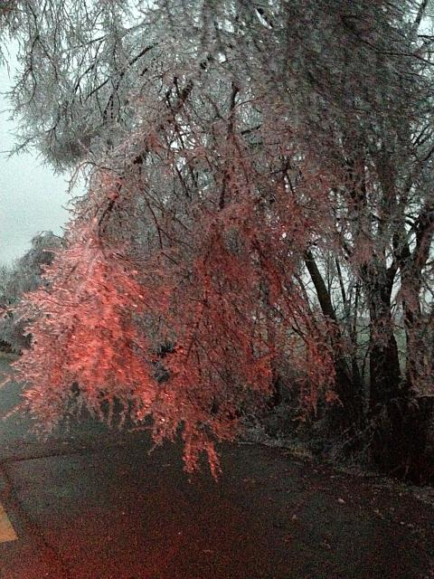 Post pictures taken with your iPhone 5C here:-ice-tree.jpg