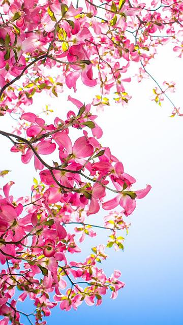 Spring Wallpapers For Iphone 6 Plus Babangrichie Org