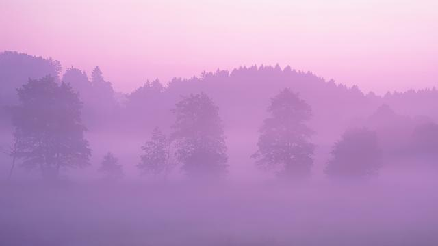 Looking for a new wallpaper or have one to share?-pink-forest.jpg