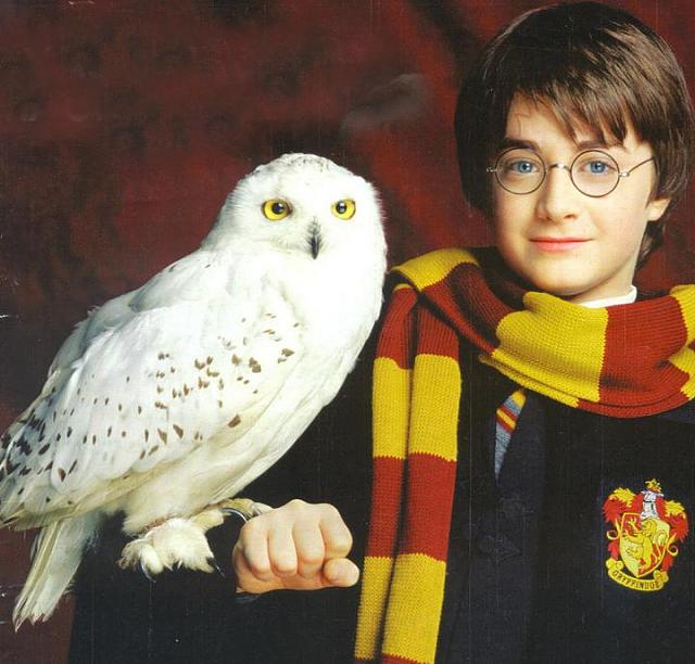 Is anyone canceling the order because of the bend issue?-harry-potter-hedwig.jpg