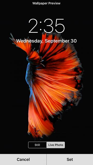 live wallpaper for iphone 6 live wallpapers not working iphone ipod forums 17785