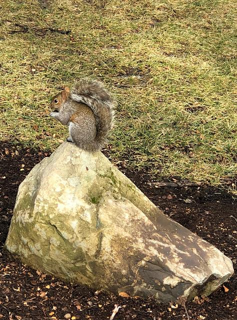 Great Phone & Great Camera - Let's See Photos Taken With Your New iPhone 8 Plus!-squirrel.jpg