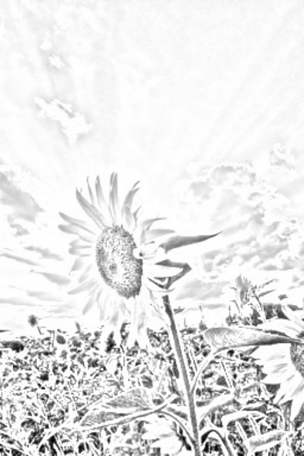 Great Pencil Sketch App (Free)!!!-ios-simulator-screen-shot-2013-01-04-1.53.25-pm.png