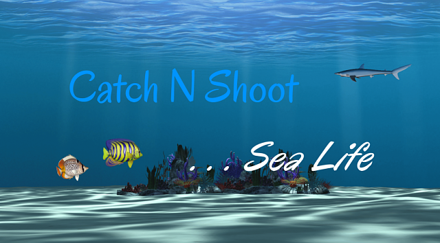 Catch N Shoot 2 ... Sea Life [GAME][FREE]-windows_846x468.png