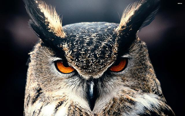iPhone 6/6 Plus/6s/6s Plus/7/7 Plus/8/8 Plus Sports Wallpaper Request Thread-22398-eagle-owl-2880x1800-animal-wallpaper.jpg