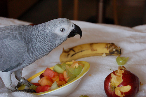 The iMore 20K / 50K Post Challenge - Are you up for it?-pepper-eating-fruit.jpg
