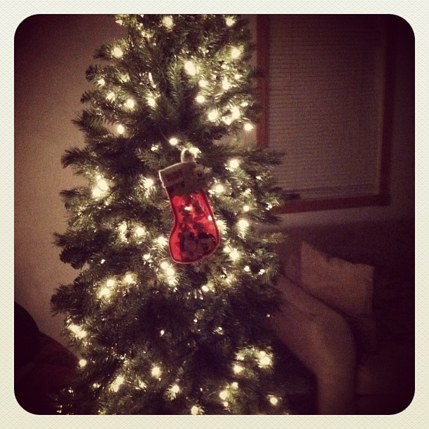 Weekly Photo Contest: Instagram!-christmas-tree.jpg