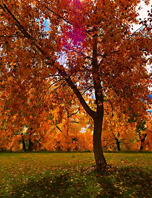 Weekly Photo Contest: Fall Colors!-img_3756.jpg