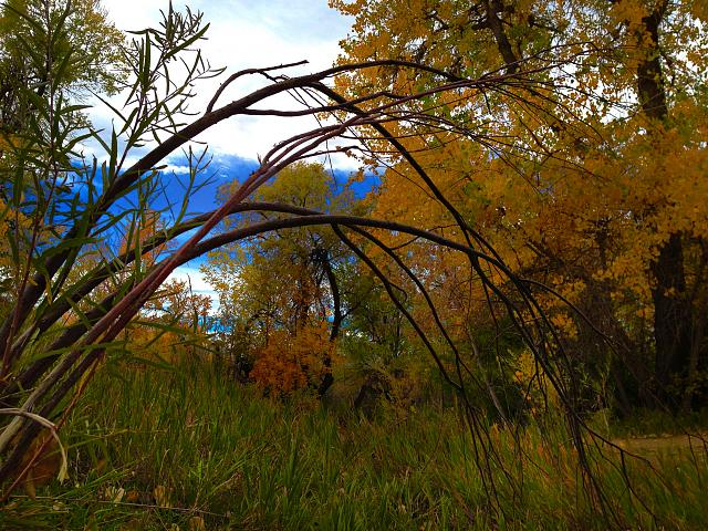 Weekly Photo Contest: Fall Colors!-img_3761.jpg