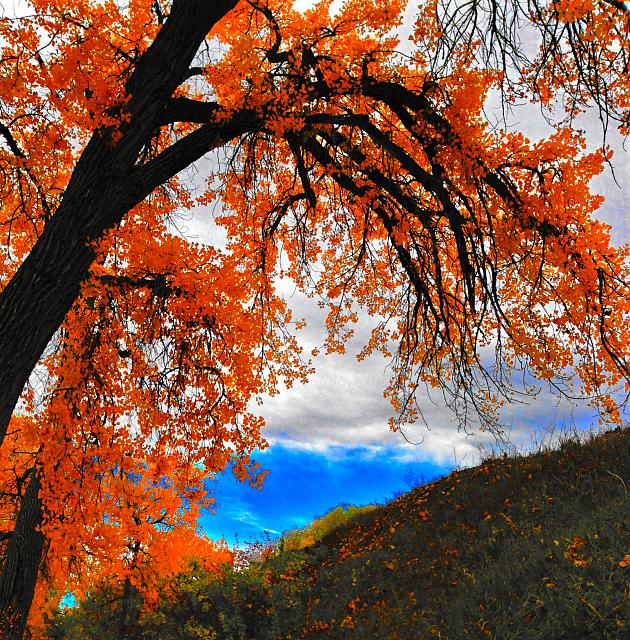 Weekly Photo Contest: Fall Colors!-img_3811.jpg