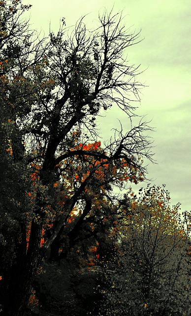 Weekly Photo Contest: Fall Colors!-img_3806.jpg