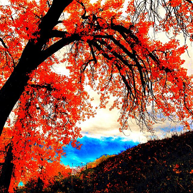 Weekly Photo Contest: Fall Colors!-img_3812.jpg