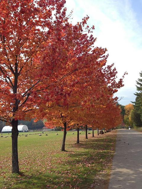 Weekly Photo Contest: Fall Colors!-imageuploadedbyimore-forums1351666047.207536.jpg