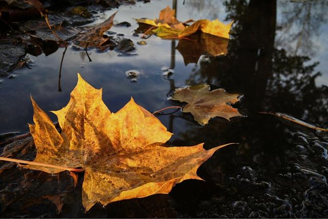 Weekly Photo Contest: Fall Colors!-imageuploadedbyimore-forums1351681307.302799.jpg