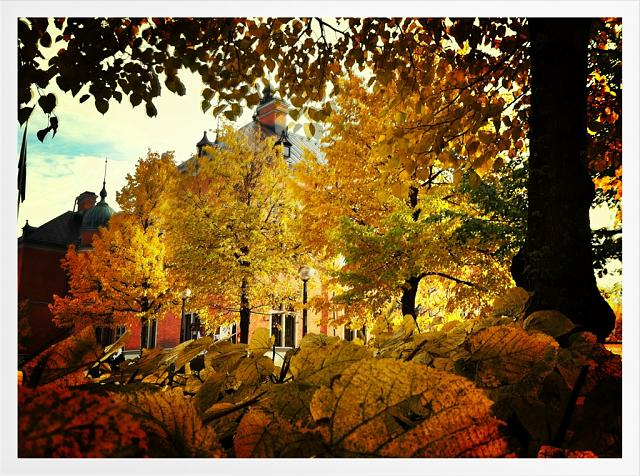 Weekly Photo Contest: Fall Colors!-imageuploadedbyimore-forums1351681353.072773.jpg
