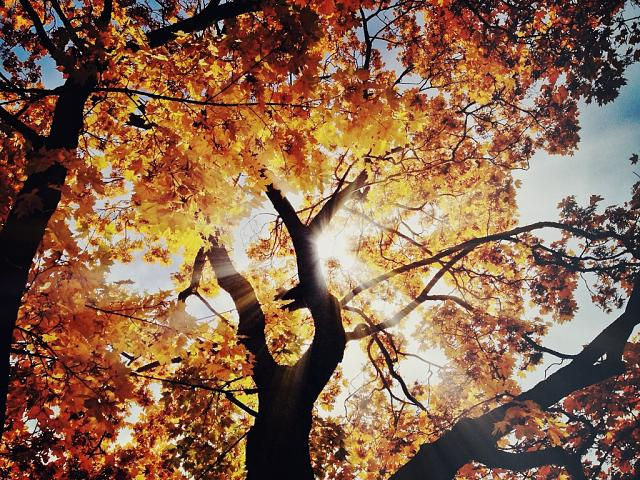 Weekly Photo Contest: Fall Colors!-imageuploadedbyimore-forums1351681395.990454.jpg