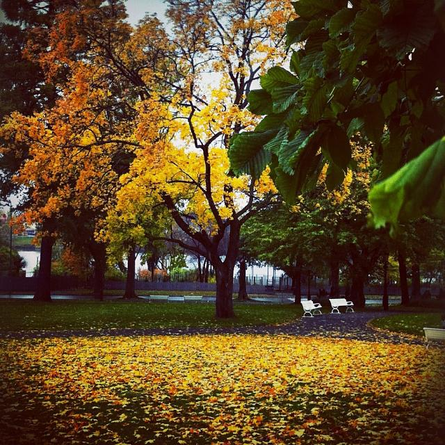 Weekly Photo Contest: Fall Colors!-imageuploadedbyimore-forums1351681953.669722.jpg