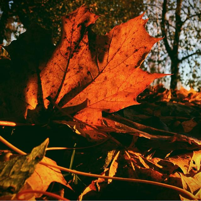 Weekly Photo Contest: Fall Colors!-imageuploadedbyimore-forums1351682056.358986.jpg