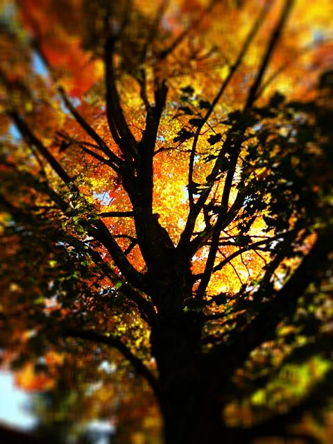 Weekly Photo Contest: Fall Colors!-imageuploadedbyimore-forums1351684796.153029.jpg