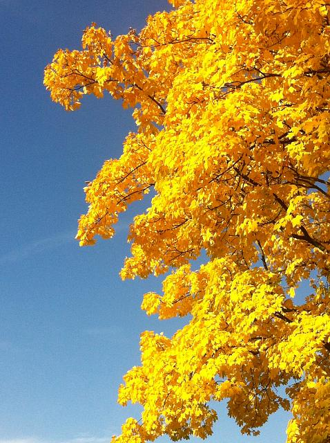 Weekly Photo Contest: Fall Colors!-foto.jpg
