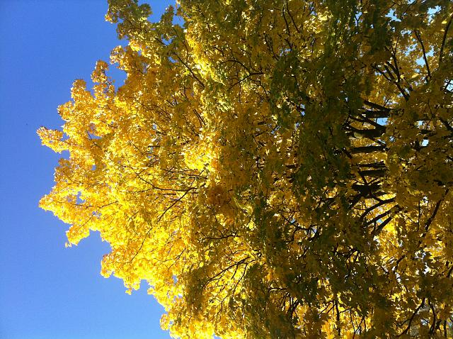Weekly Photo Contest: Fall Colors!-foto2.jpg