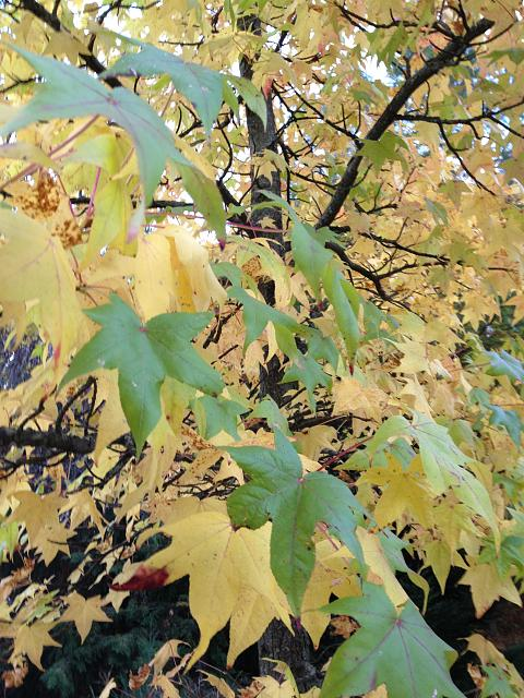Weekly Photo Contest: Fall Colors!-photo.jpg