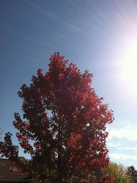 Weekly Photo Contest: Fall Colors!-img_1947.jpg