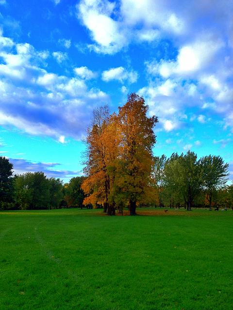 Weekly Photo Contest: Fall Colors!-iphone-007.jpg