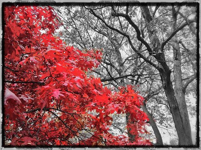 Weekly Photo Contest: Fall Colors!-image.jpg