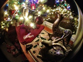 Weekly Photo Contest: Holidays!-imageuploadedbyimore-forums1356401203.551193.jpg
