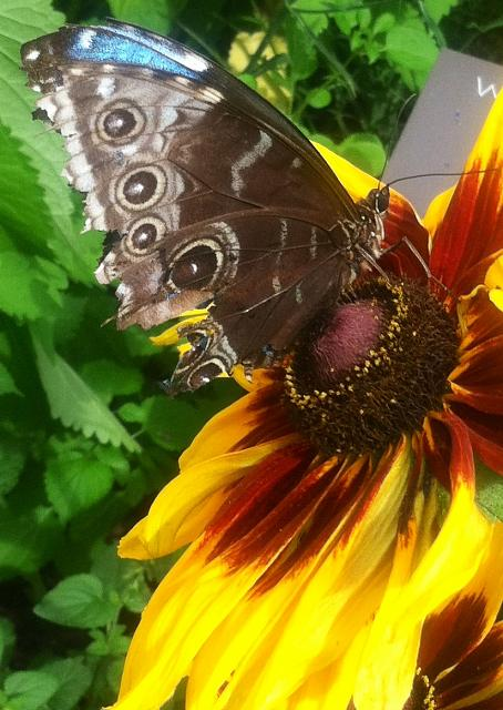 iMore Weekly Photo Contest: Summer Fun!-butterfly-flower.jpg