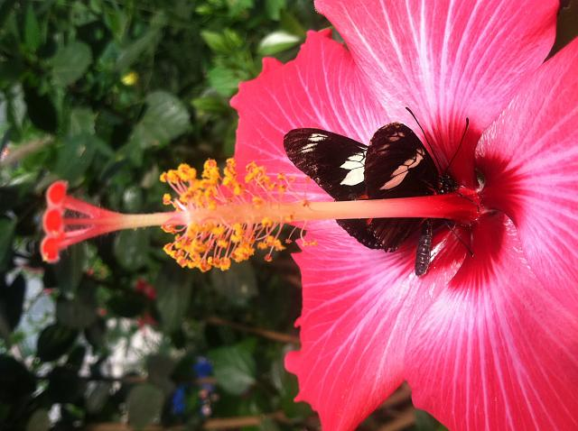 iMore Weekly Photo Contest: Summer Fun!-flowerbutterfly.jpg