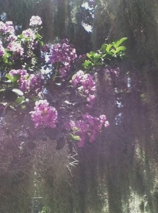 Weekly photo contest: Flowers and trees!-tumblr_mp7w2413yj1r36c8eo1_500.jpg