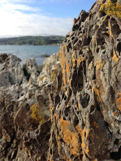 Weekly photo contest: Texture!-whitirea-rock.jpg