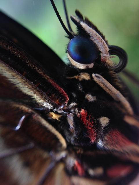 Weekly Photo Contest: Macro!-butterfly-macro.jpg