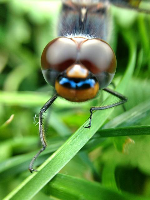 Weekly Photo Contest: Macro!-photo-aug-28-7-29-14-pm.jpg