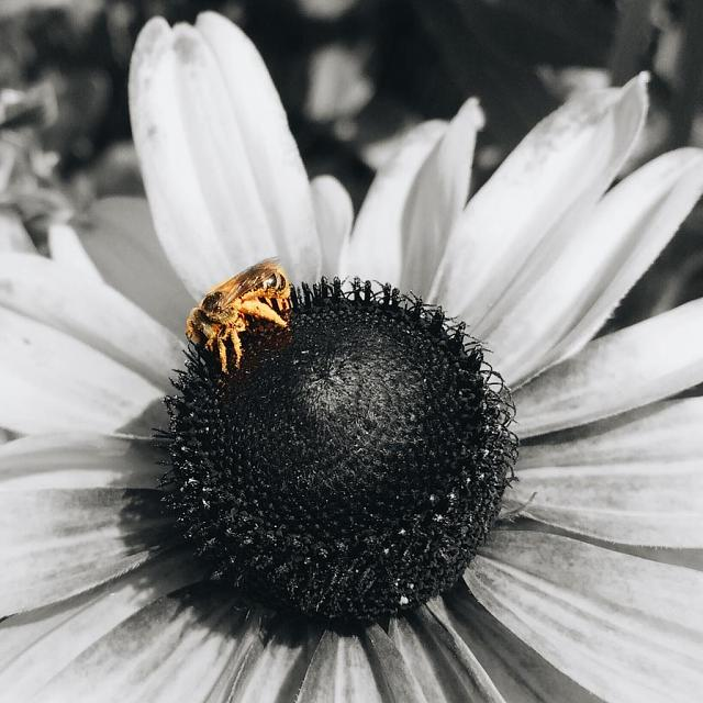 Weekly Photo Contest: the Birds and the Bees-a4a6u4a4.jpg