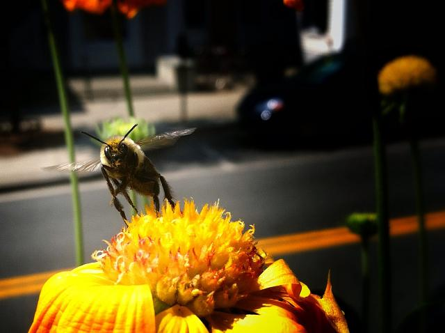 Weekly Photo Contest: the Birds and the Bees-image.jpg