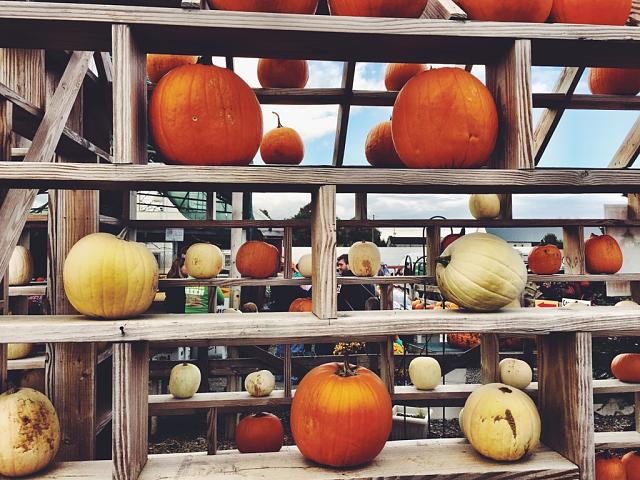 Weekly Photo Contest: Pumpkin!-imageuploadedbytapatalk1414424764.747575.jpg