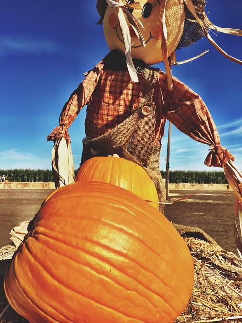 Weekly Photo Contest: Pumpkin!-imoreappimg_20141027_115652.jpg