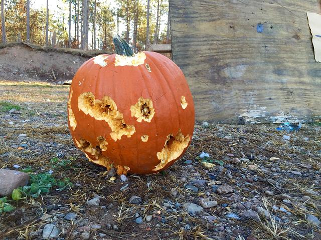 Weekly Photo Contest: Pumpkin!-photo-oct-25-9-42-02-am.jpg