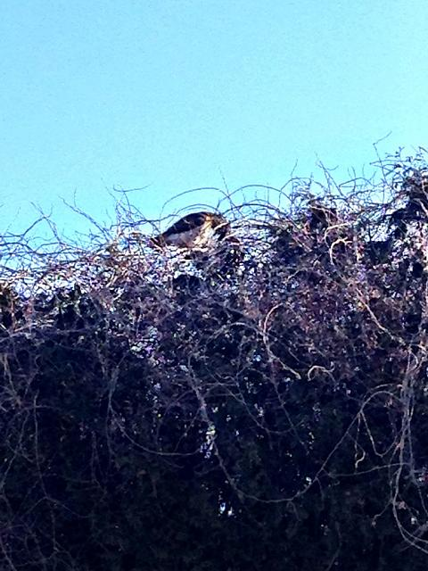 Post the very last (most recent) photo in your camera roll.-imageuploadedbytapatalk1424724761.361193.jpg