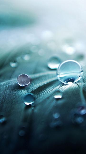 iPhone 5 wallpapers-macro_rain_drops.jpg