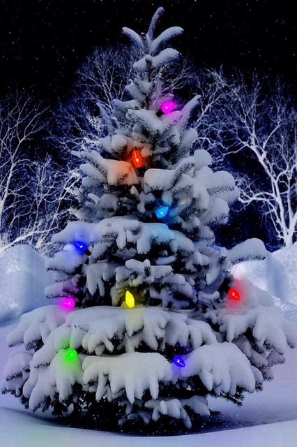 Winter Holiday iPhone Wallpapers-imageuploadedbyimore-forums1386895309.906534.jpg