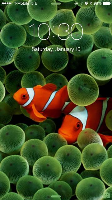 New Wallpaper in honor of 8th anniversary of iPhone.-imageuploadedbyimore-forums1420907506.514531.jpg
