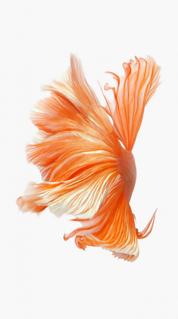 Looking for a new wallpaper or have one to share?-orangefish.png